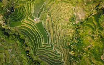 5 Reasons Why You'll Love The Tegalalang Rice Terrace In Ubud