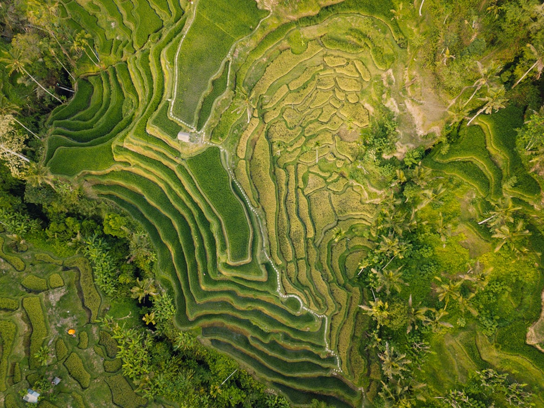 Tegalalang Rice Terraces near Ubud